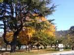 松山城下公園の樹20101120